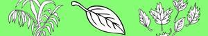 Bitkiler ve Yapraklar boyama